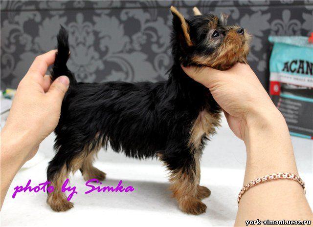 Мини шоп на выставках производители щенки лист чемпионов производительницы